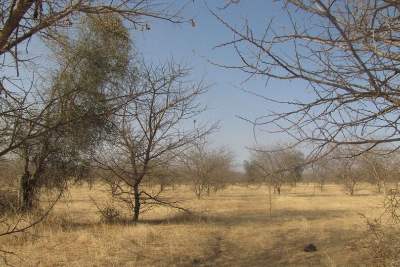 Httpwwwallandetrobertcomacacia Gum The Africa Sahel Gold Gum Belt